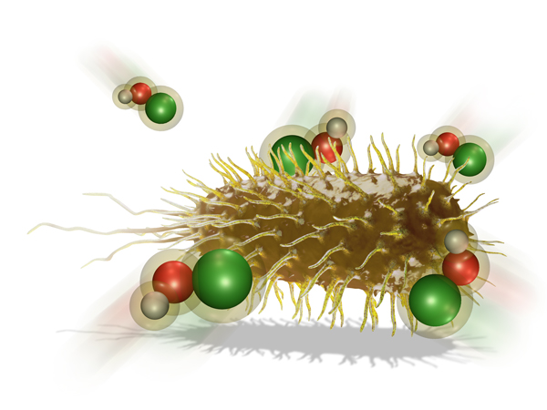 hypo bacteria pic
